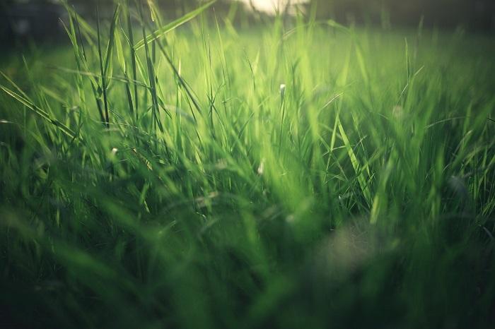 Ako založiť trávnik na mnoho rokov
